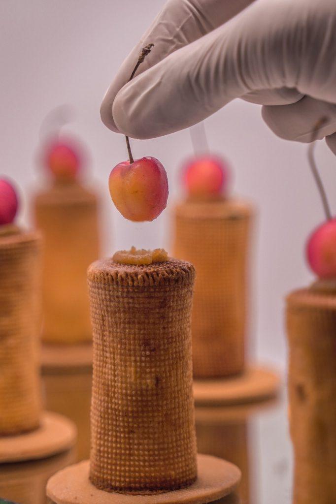 COTHM hosts 'Modern Desserts Workshop'